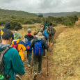 Some of our scouts went on a morning hike at Sycamore Canyon and Goodan Ranch. they had to good fortune to be joined by Webelos. Thanks for joining us!!!