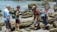 Our scouts went to the tide pools on Scripps beach. Afterwards they went to the Scripps Aquariumwhich is nearby.